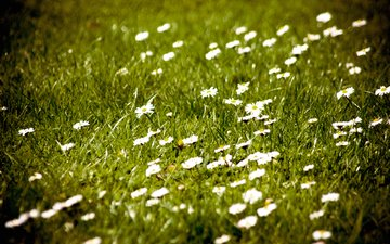 полюс, cvety, oboi, priroda, foto