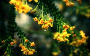 makro, rasteniya, priroda, vetka, listya. cvety
