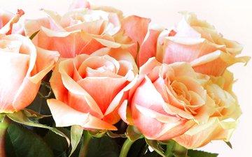 cvety, butony, rozy, buket, леспестки
