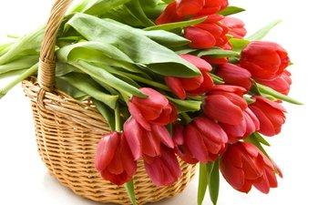 цветы, красные, корзина, тюльпаны, korzina, tyulpany, krasnye