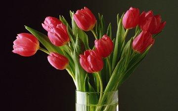 цветы, бутоны, лепестки, букет, тюльпаны, tyulpany, rasteniya