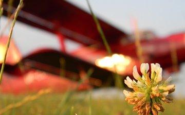 cvetok, aviaciya, kreativ