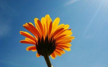 nebo, cvetok, solnce, kolendula