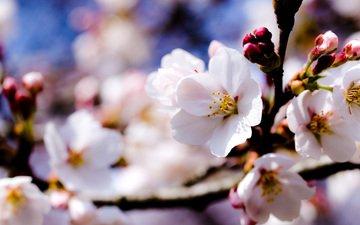 cvety, vesna, belye, nebo, vetki, yablonya, derevya