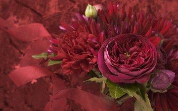 cvety, fioletovyj, listya, buket, l, bordovyj, malinovyj