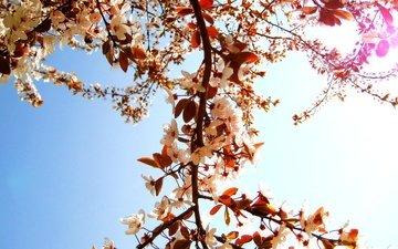 цветы, cvety, derevo, vetki, логово, леспестки