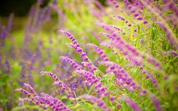 cvety, trava, makro, listya, zelen, priroda, fo, леспестки