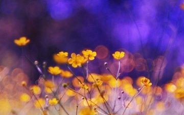 cvety, krasota, priroda
