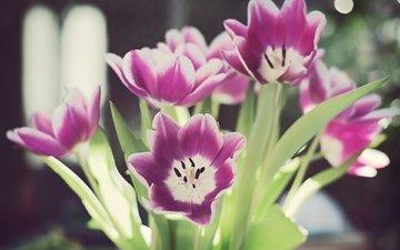 cvety, listya, tyulpany, bliki, stebli, boke, леспестки