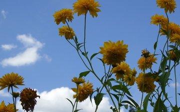 cvety, leto, zheltye