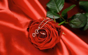 cvetok, roza, krasnaya, romantika, kolco, lyubov, podves