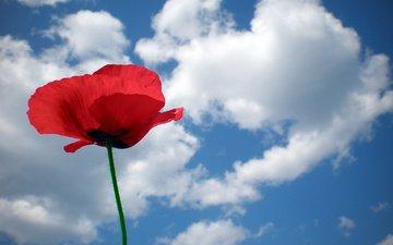 mak, nebo, cvetok, oblako