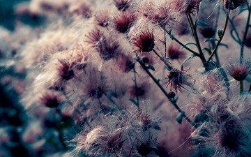 fon, cvety, oboi, makro, rasteniya, priroda, foto