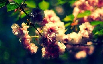 cvety, vetki, makro, listya, rasteniya, priroda, lepestk