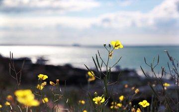 cvety, makro, rasteniya, priroda, stebelki, леспестки
