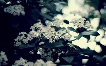 обь, cvety, vetki, listya, zelen, foto, rastenie, леспестки