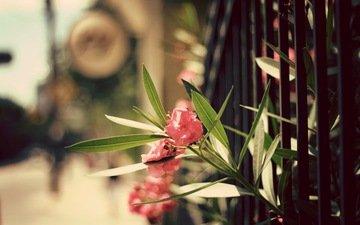cvety, listya, zabor, леспестки