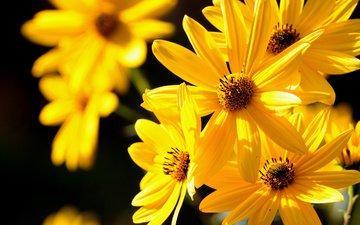 красивые, желтые, makro, zheltye, cvetochki