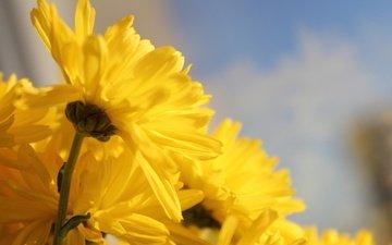 cvety, zheltye, krasivye