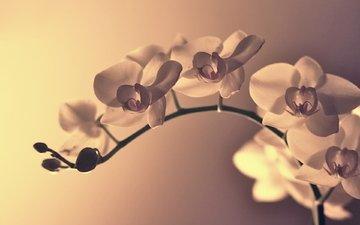 cvety, cvetok, makro, vetka, izgib, леспестки