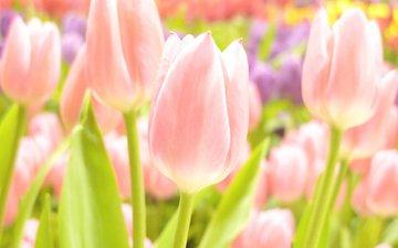 cvety, vesna, leto, vesennie, letnie oboi