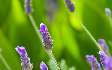 трава, природа, макро, лето, cцветок