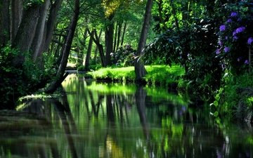 цветы, деревья, река, зелень, лес, отражение, кусты