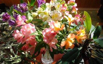 цветы, букет, рододендрон
