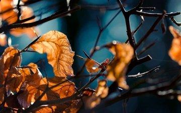 лес, листья, макро, ветви, осень