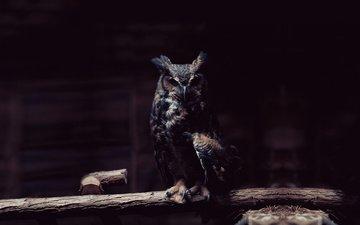 сова, ветка, хищник, сидит, птица, темный фон, тени,  сова