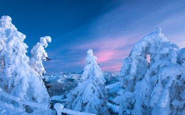 небо, деревья, горы, снег, природа, лес, закат, зима, швейцария, ели