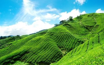 небо, облака, склон, горный, чайная плантация