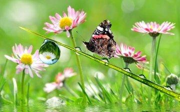 цветы, капли, бабочка, крылья, насекомые, стебель
