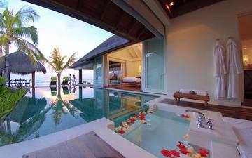 palm trees, pool, tropics