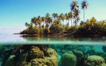 море, пальмы, под водой, тропики