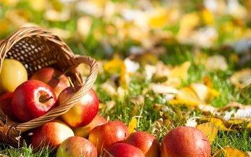трава, листья, фрукты, яблоки, осень, корзина