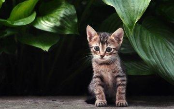 растения, листья, кошка, взгляд, котенок, полосатый
