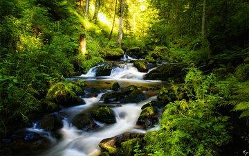 деревья, река, камни, лес, ручей, германия, шварцвальд