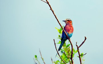 branch, foliage, colorful, bird, beautiful