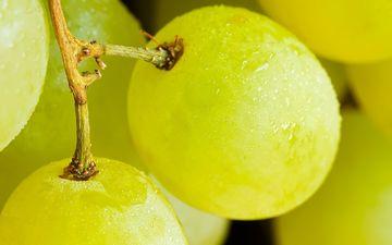 вода, макро, виноград, капли, фрукты, ягоды, спелые, сочные, виноградинки