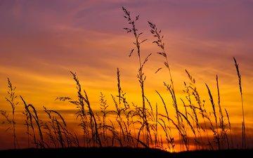 небо, трава, природа, закат, макро, поле, колоски