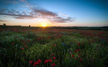 небо, цветы, облака, солнце, поле, великобритания, маки, англия, ромашки, хартфордшир