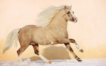 лошадь, конь, грива, жеребец, жеребенок, аллюр