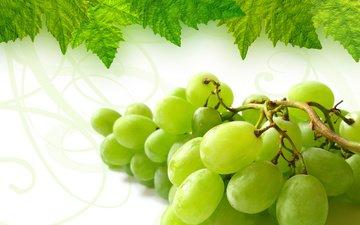 листья, зелёный, виноград, гроздь
