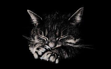 мордочка, лапы, кошка, сон, котенок, полосатый