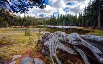 озеро, горы, лес, коряга