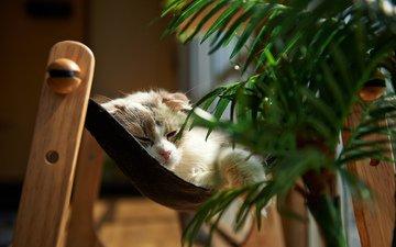 кошка, сон, комната, растение, обои кот