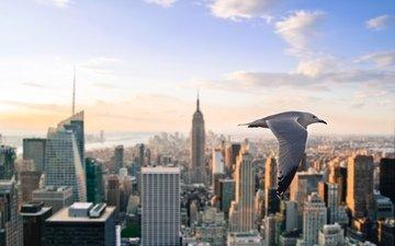 небо, полет, небоскребы, чайка, птица, сша, нью-йорк
