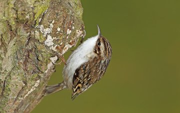 природа, дерево, фокус камеры, птица, оперение