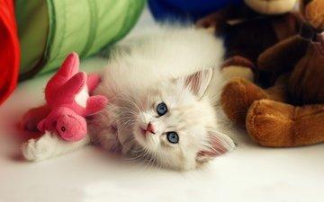 цветы, кошка, котенок, пушистый, белый, игрушки, малыш